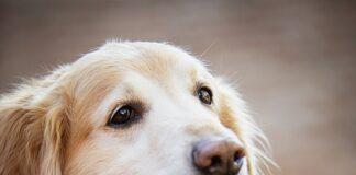 jakiego zapachu nie lubią psy