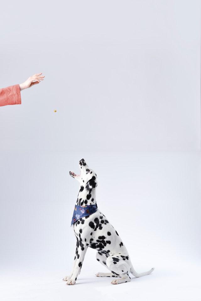 Witaminy i suplementy dla psów